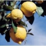 Body Smart – Lemon Cold Pressed         10ml