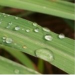 Body Smart – Lemongrass Cochin         10ml