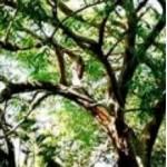 Body Smart – Rosewood        10ml
